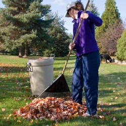Low_Back_Pain-Raking-Leaves